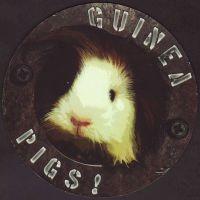 Pivní tácek guinea-pigs-1-oboje-small